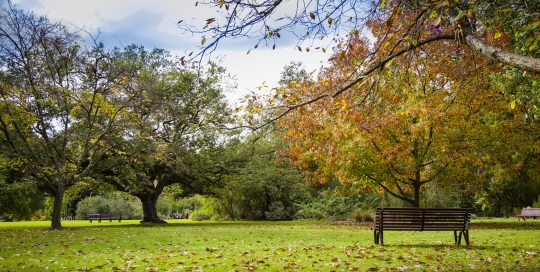 Image of Oak Lawn at Royal Botanic Gardens Victoria Melbourne showing autum scene of trees with falling leaves, grass and park bences