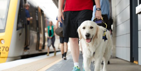 Person on train platform with guide dog